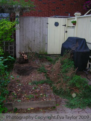 Demo Day 1 - Shrub Removal