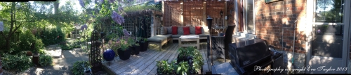 This is a panoramic view of our back yard in Toronto, Canada. Such a shame that the crab apple tree is past its prime.