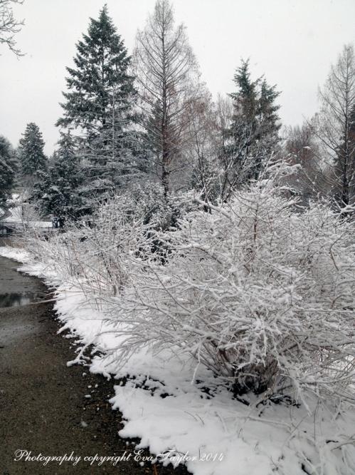 Snow_2420