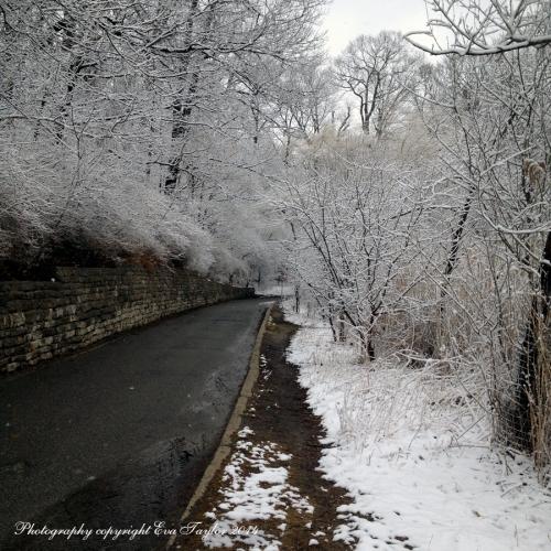 Snow_2424