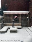 Snow Dec 11-3